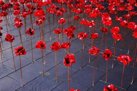 poppies-2585930_1920